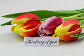 Thinking of you card with colorful tulips