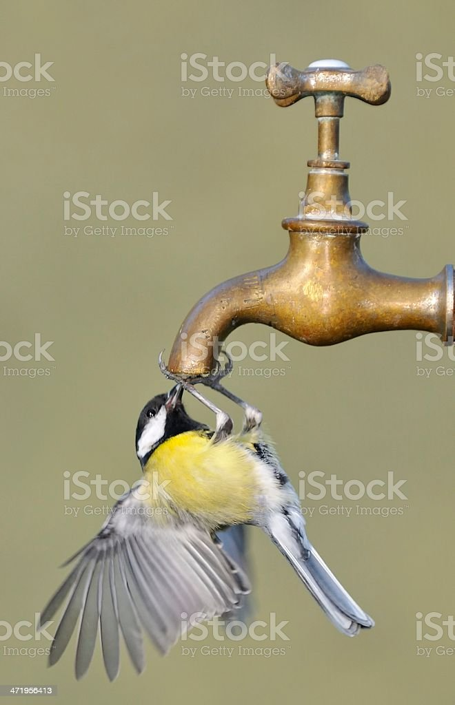 Thirsty. royalty-free stock photo