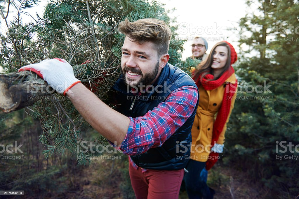 This Christmas tree is big and so heavy stock photo