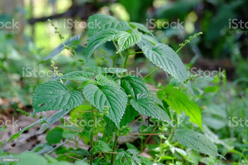 This is a group of toxic plant stock photo