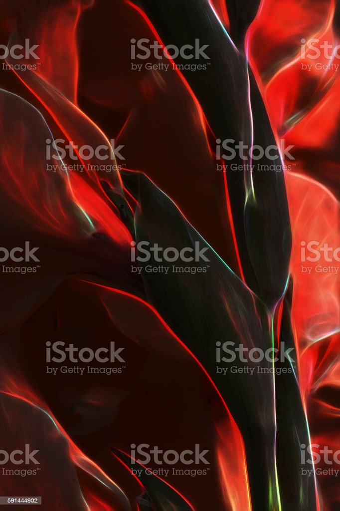 Abstract Gladiolus Lucifer the Devil's Fire stock photo