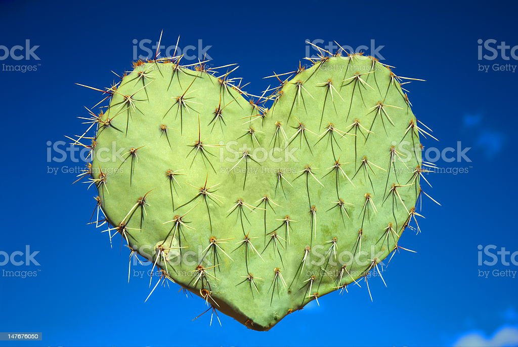 This prickly love... royalty-free stock photo