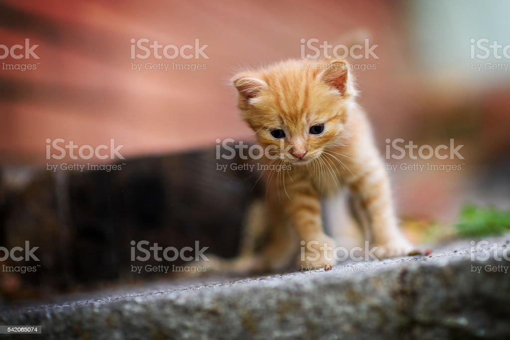 This Step Is Too Hogh For Me stock photo