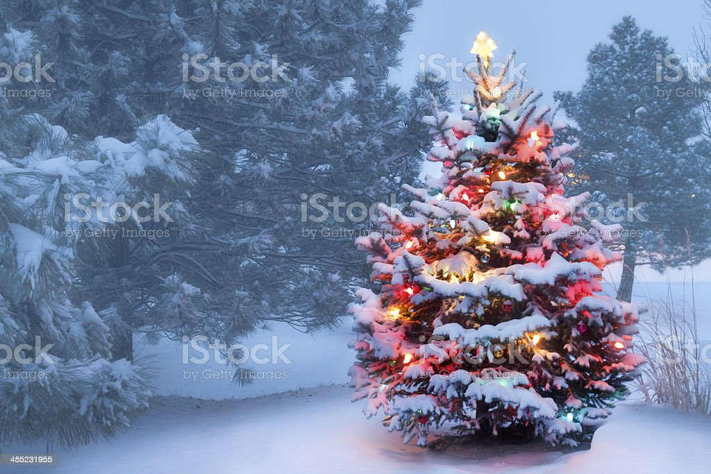 This Tree Glows Brightly On Snow Covered Foggy Christmas Morning stock photo