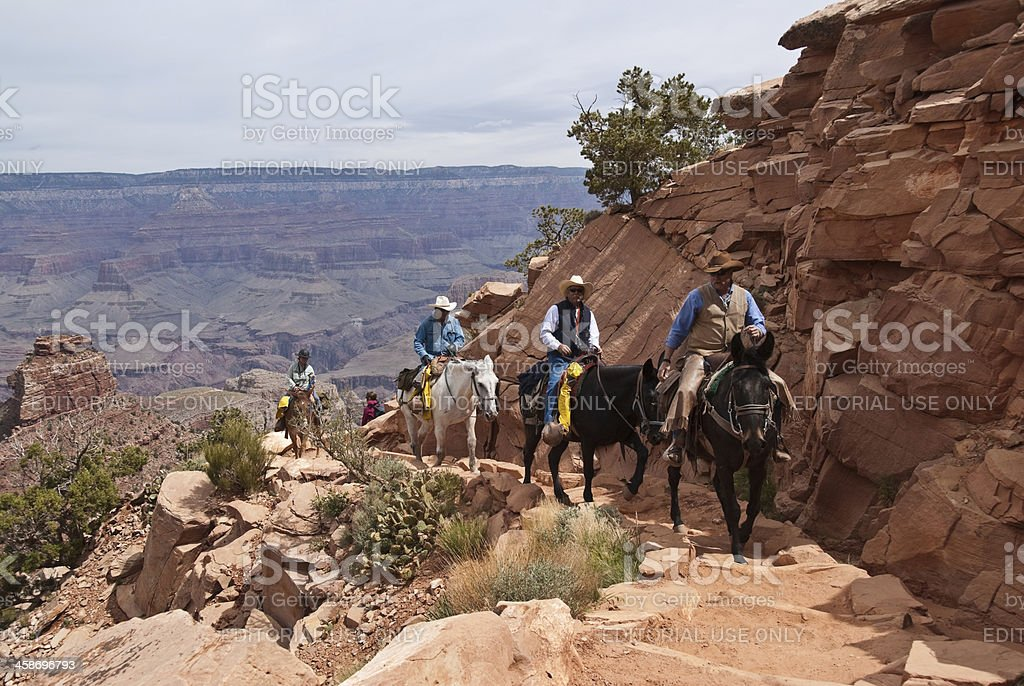Wrangler Leading a Mule Train up the South Kaibab Trail stock photo