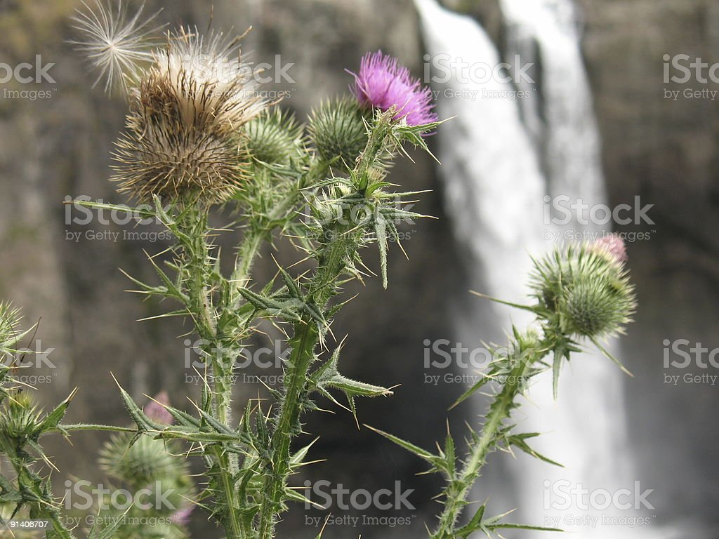 thistle and waterfall stock photo