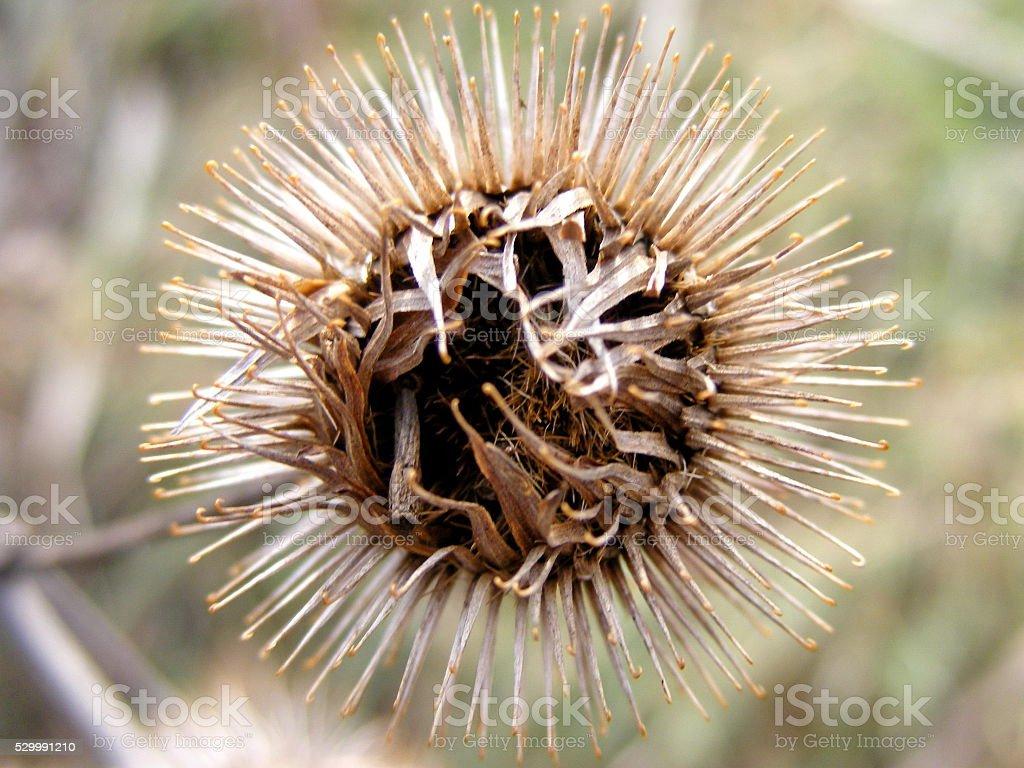 Thistle plant macro stock photo