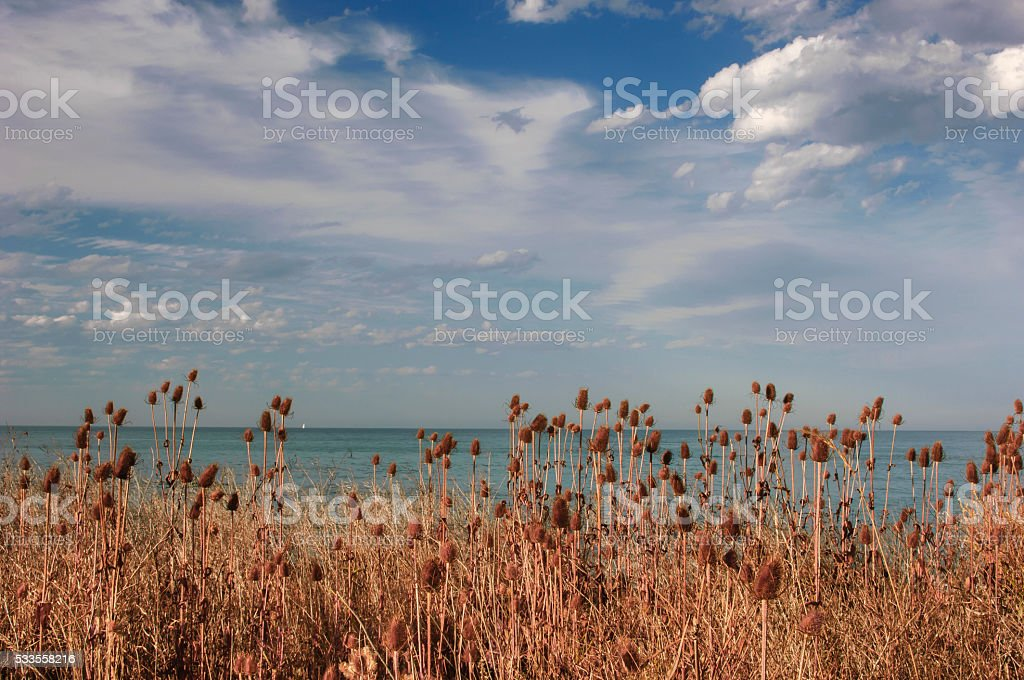 Thistle Plants, Ocean and Clouds stock photo