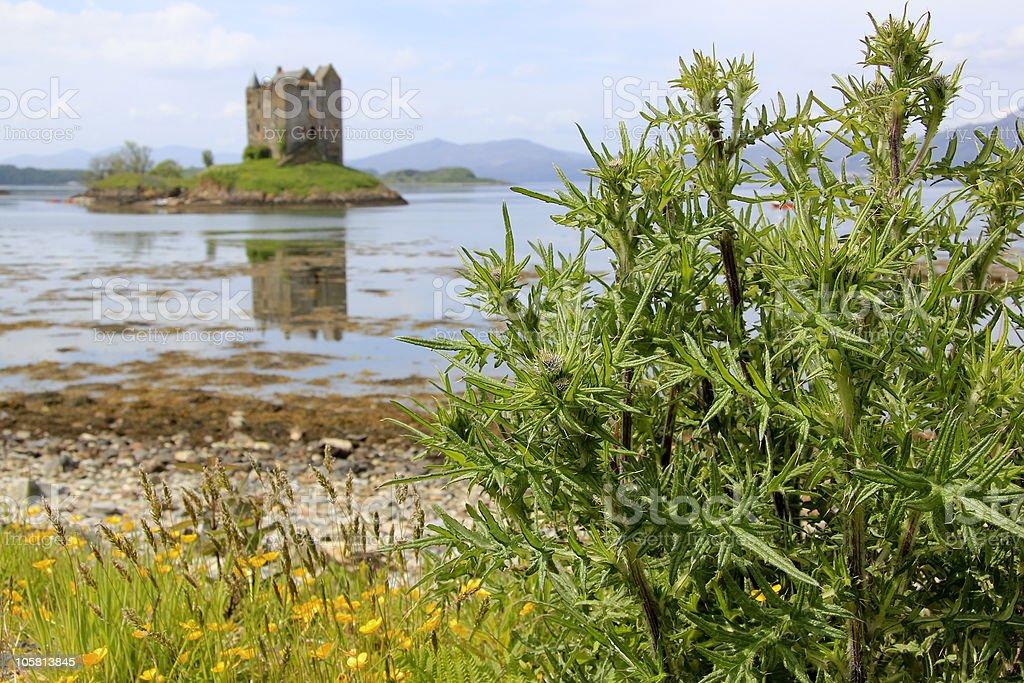 thistles loch linnhe castle stalker royalty-free stock photo