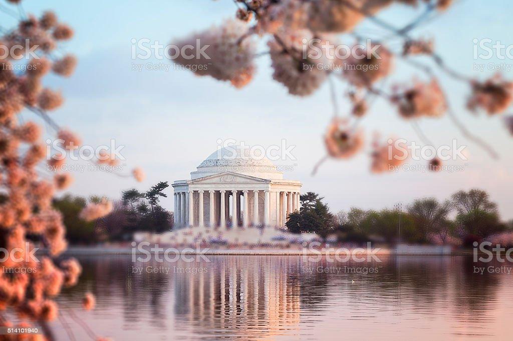 Thomas Jefferson Memorial with Sakura stock photo