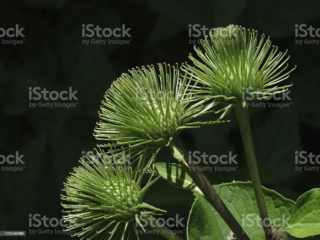 Thorn stock photo