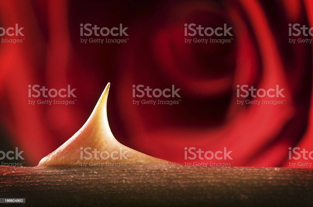 Thorn royalty-free stock photo
