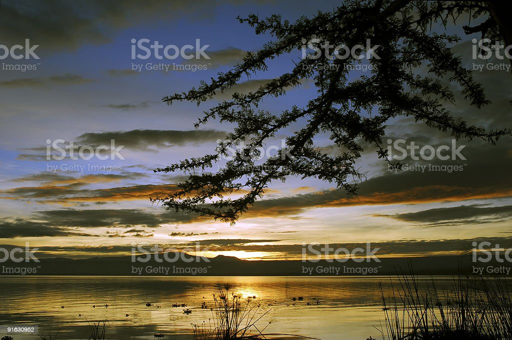 Thorn tree in the Sunrise stock photo