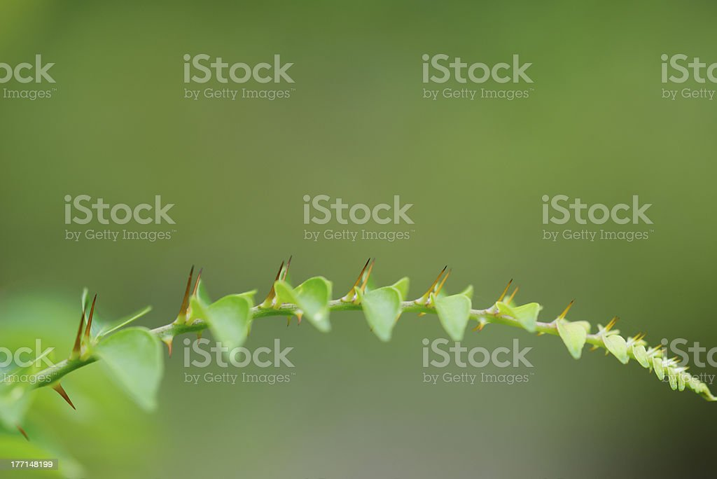 Thorns of a leaf royalty-free stock photo
