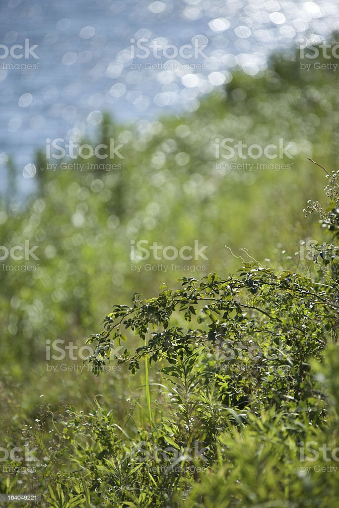 thorns of the riverside royalty-free stock photo