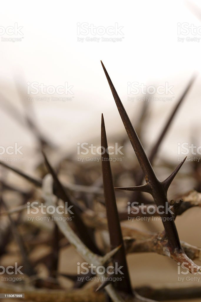thorns stock photo