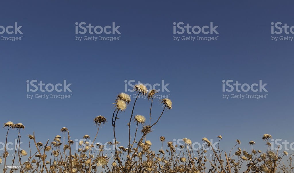 Thorns with flowers against the blue sky royalty-free stock photo