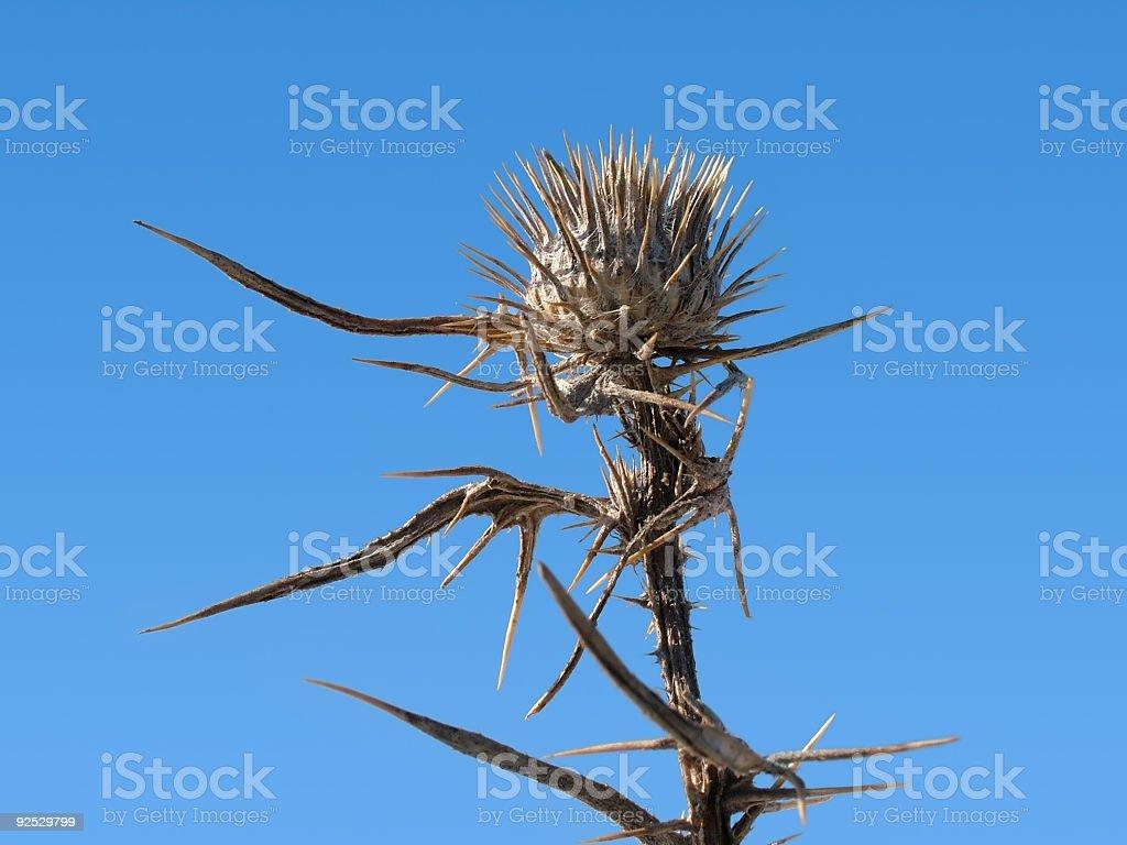 Thorny plant royalty-free stock photo