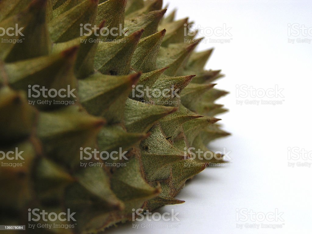 thorny situation #1 royalty-free stock photo