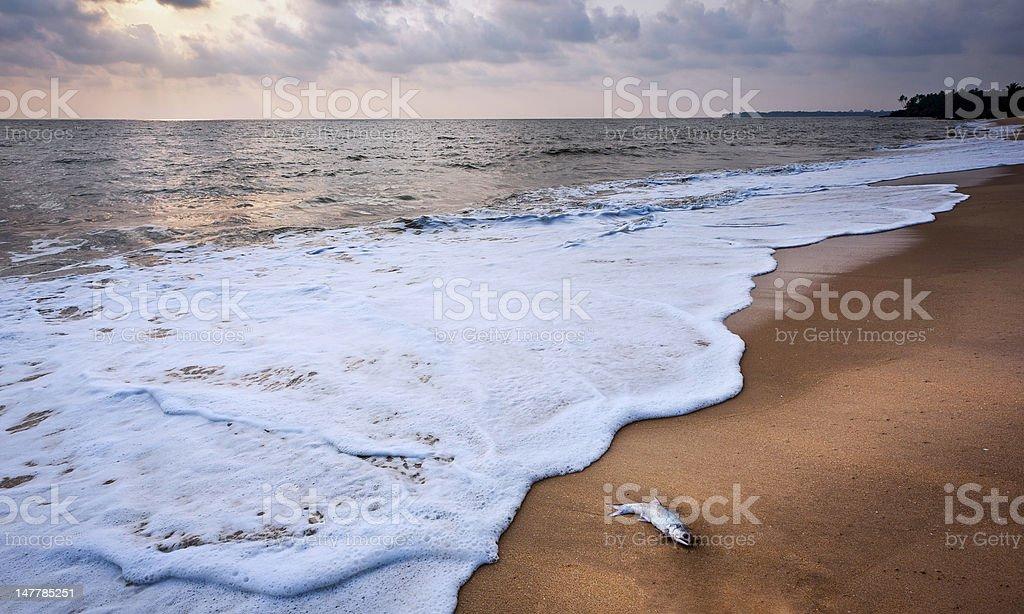 Thottada beach, Kannur, Kerala, India. stock photo