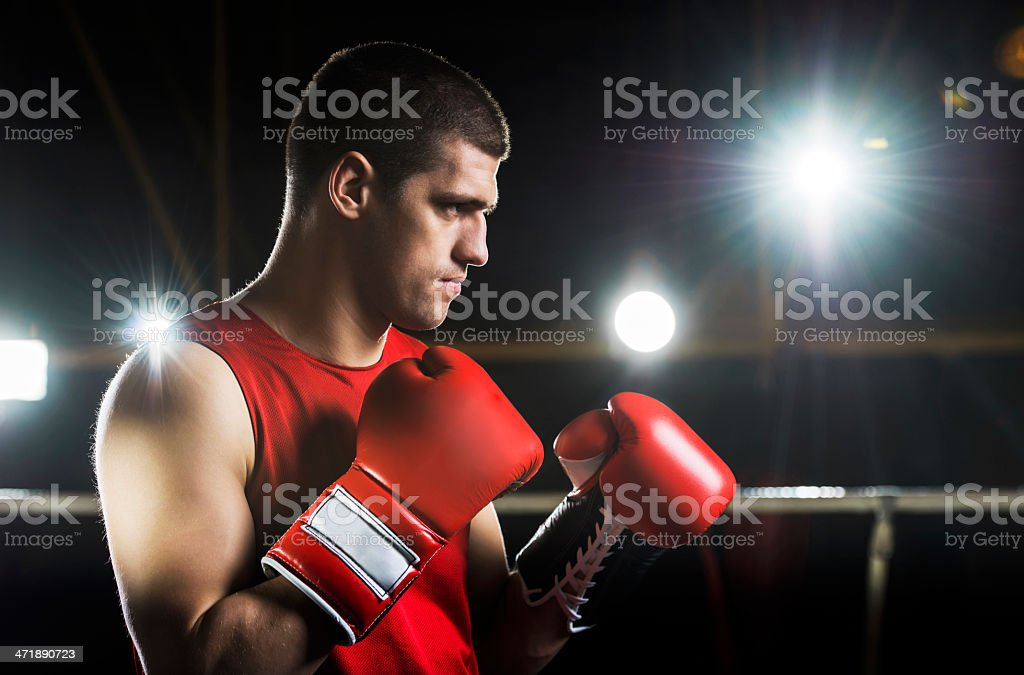 Though boxer exercising. stock photo
