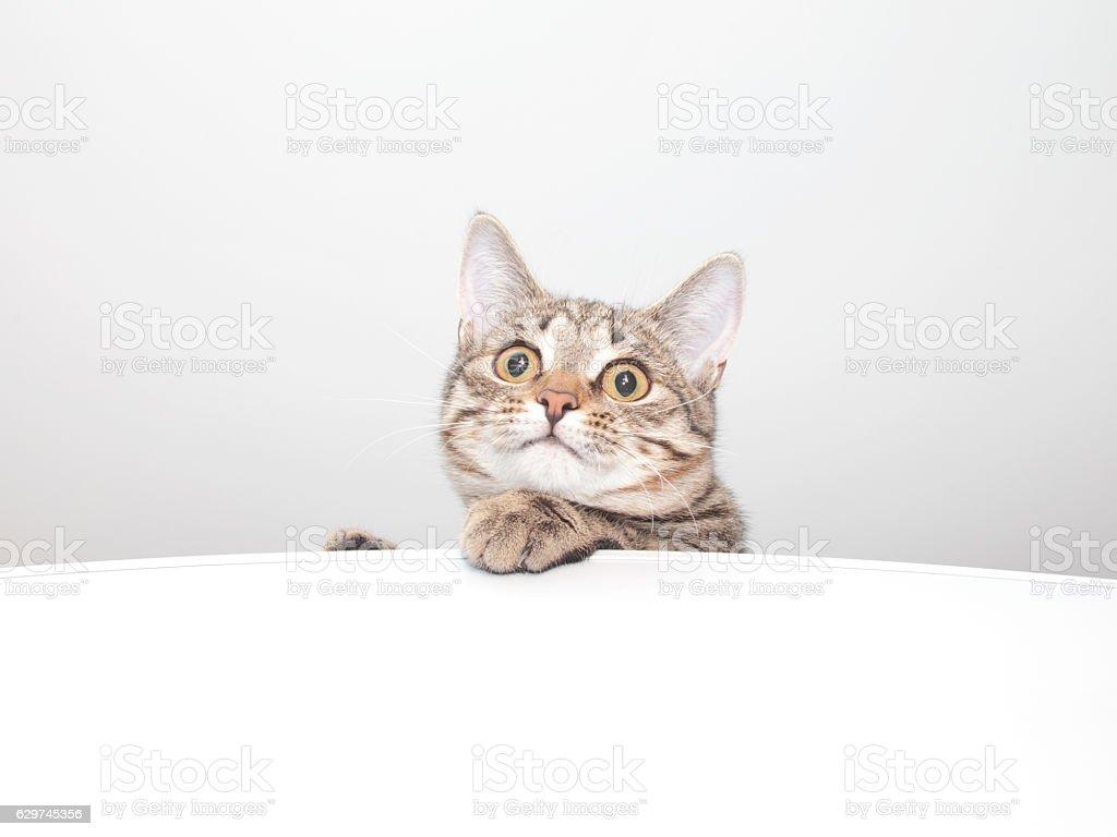 Thoughtful cat face. Kitten portrait stock photo