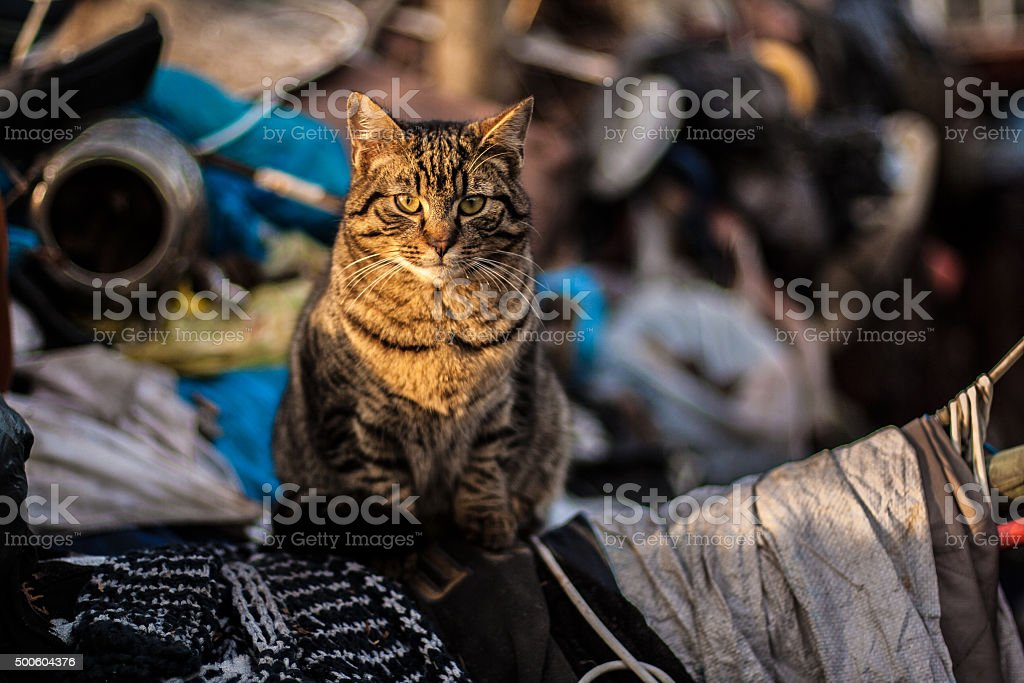 Thoughtful cat stock photo
