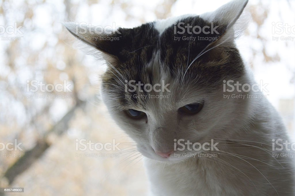 thoughtful cat stock photo
