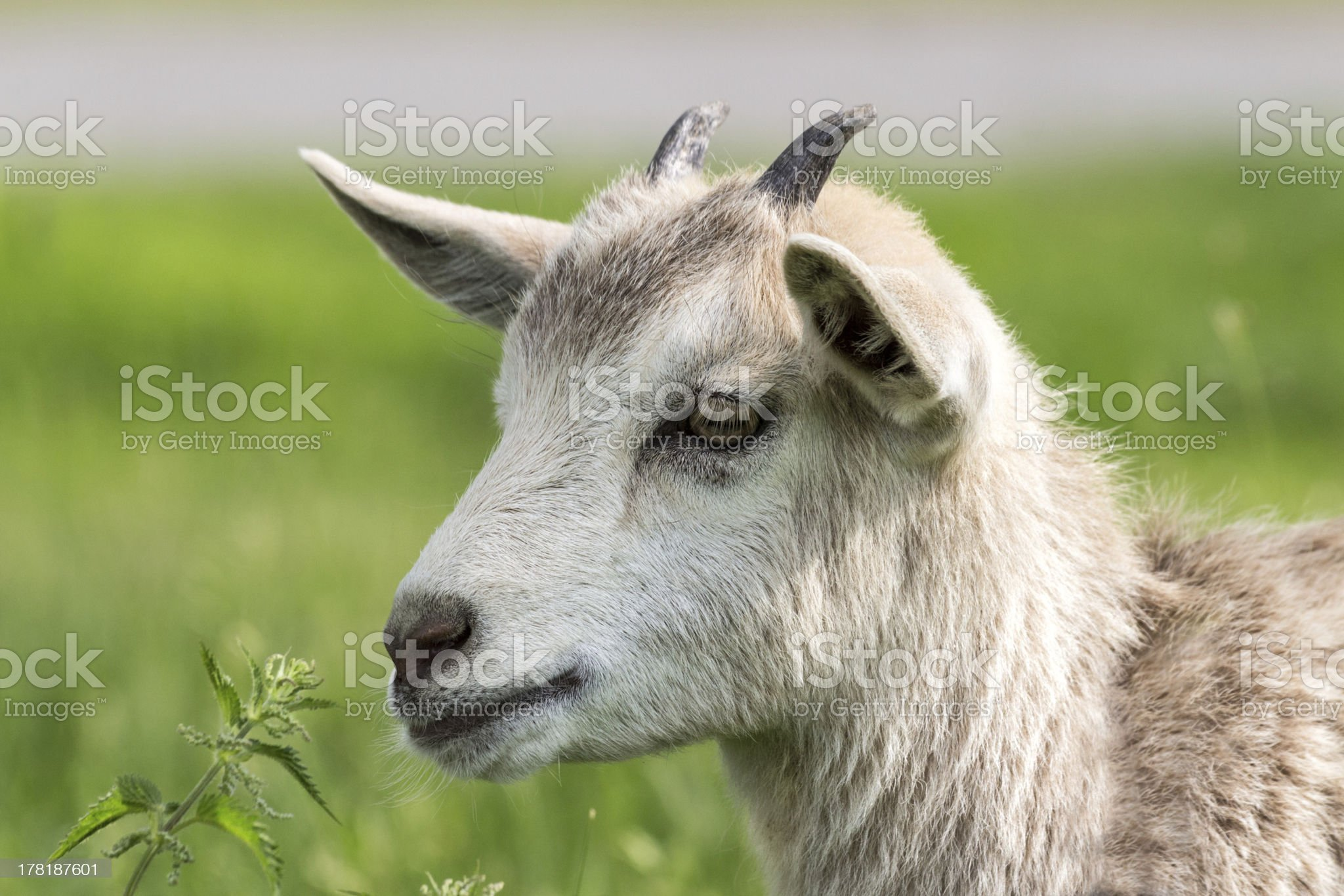 Thoughtful look royalty-free stock photo