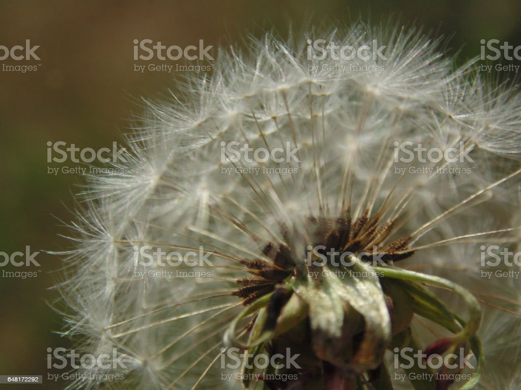 A Thousand Wishes stock photo