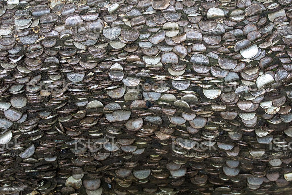 Thousands of Coins Hammered Into a Tree stock photo