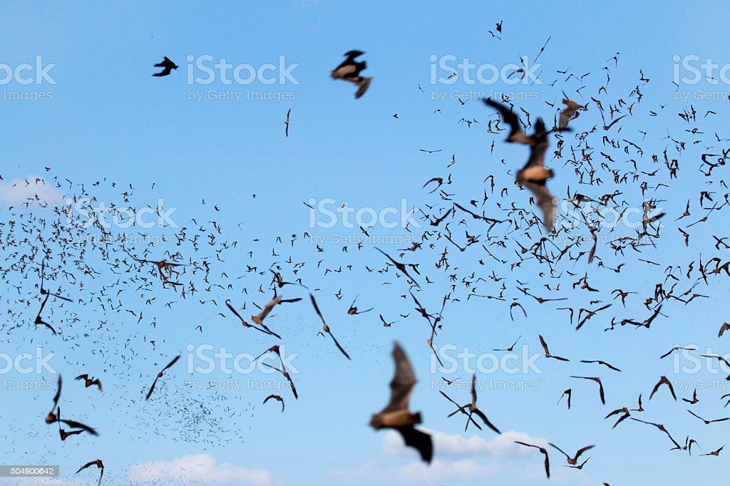 Thousands of flying Mexican free-tailed bats Texas stock photo