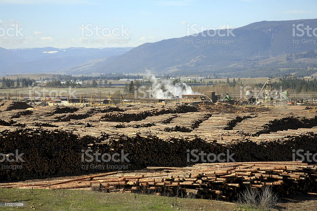 Thousands of Logs At The Sawmill royalty-free stock photo