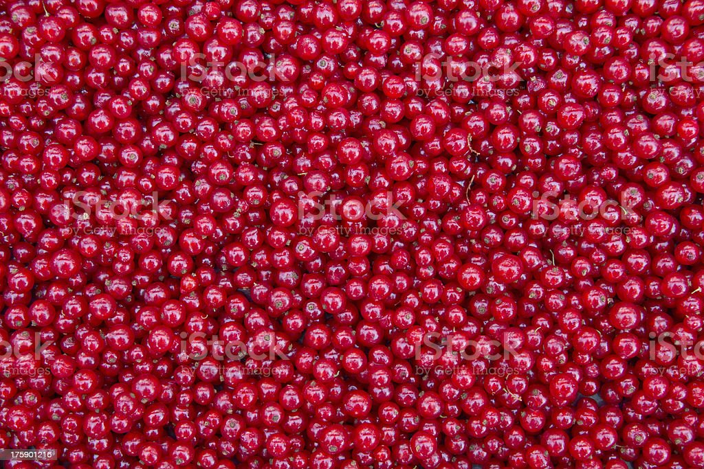 Thousands Of Red Currants royalty-free stock photo