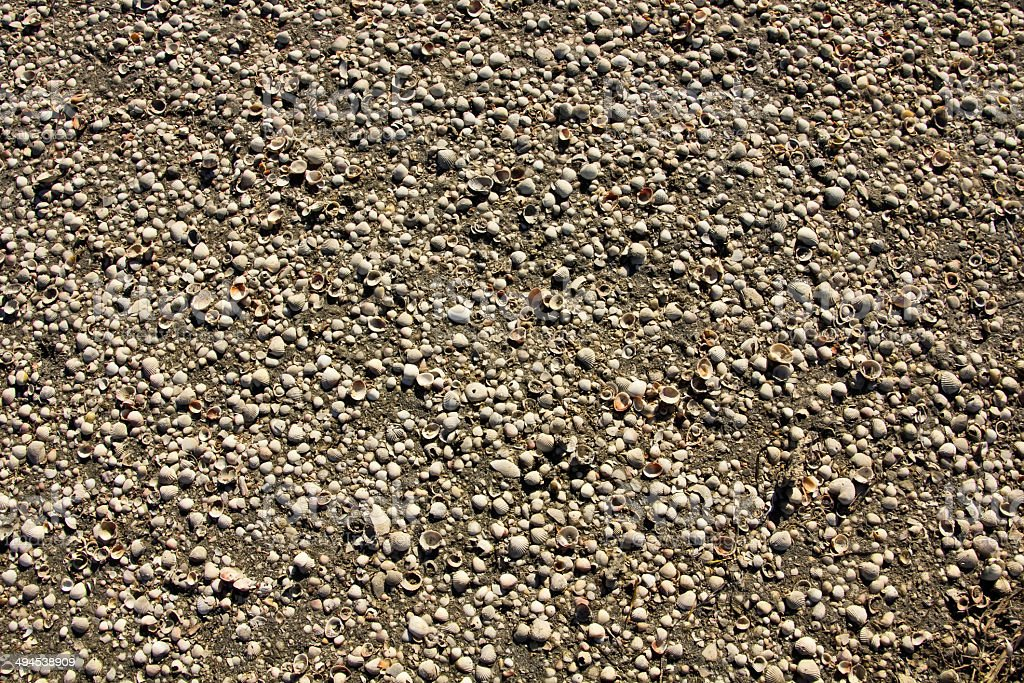 thousands of shells on the beach background stock photo