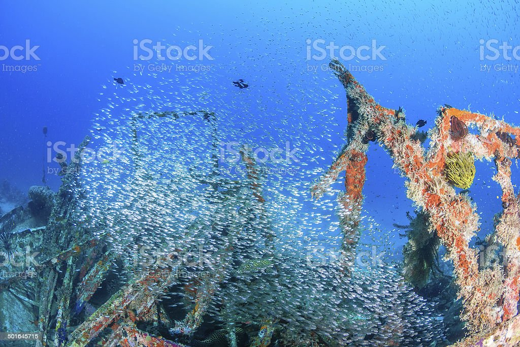 Thousands of tiny glassfish on an underwater wreck stock photo