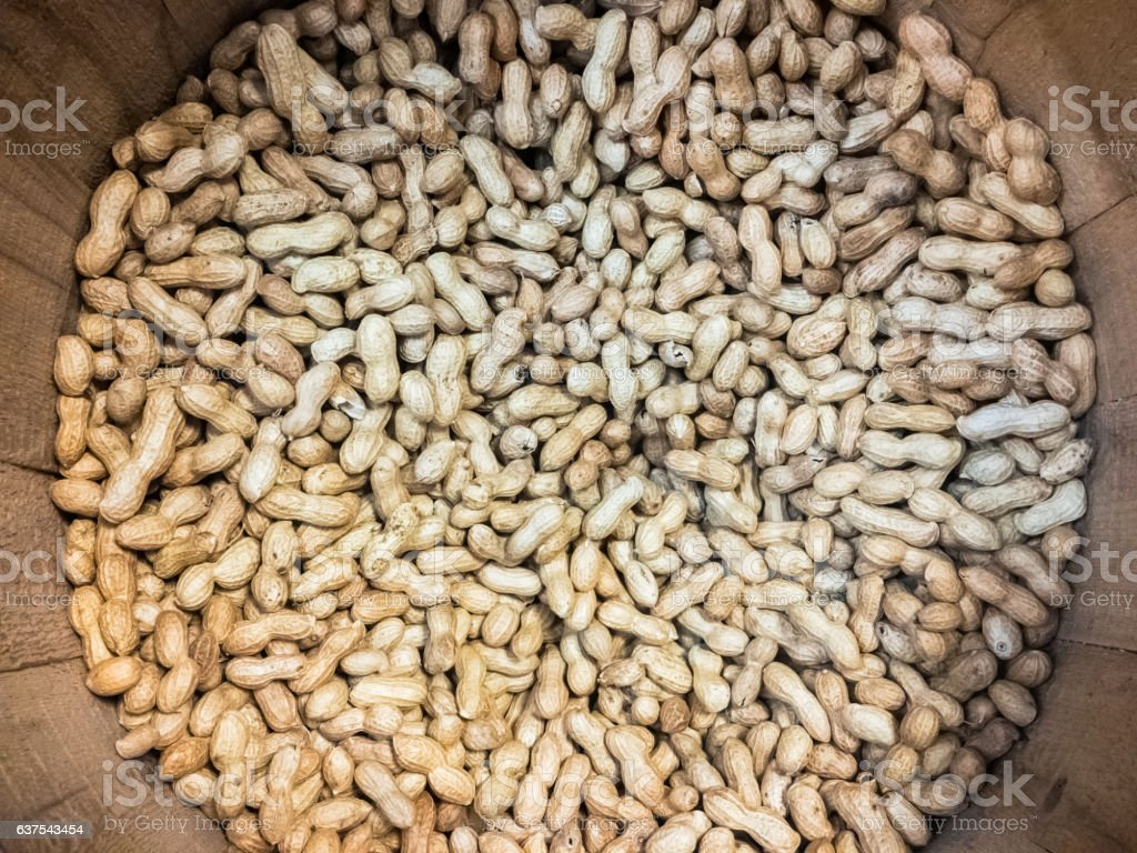 Thousands of unshelled peanuts in a barrel from above stock photo