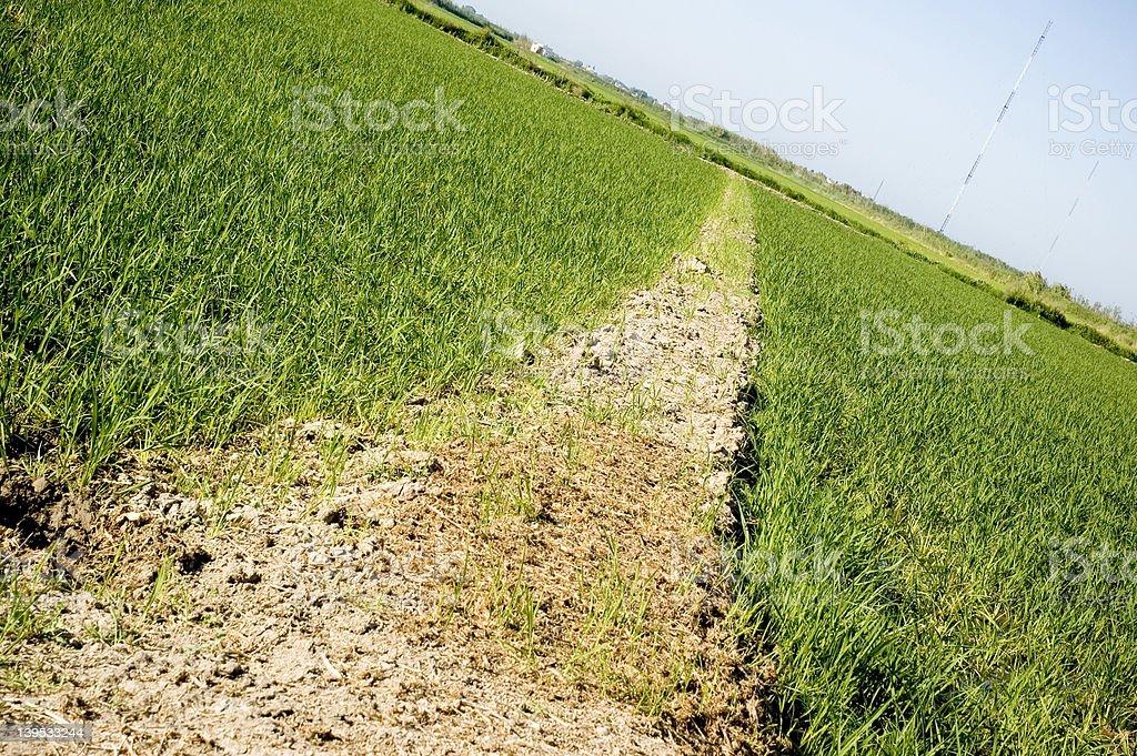 Thre Grass stock photo