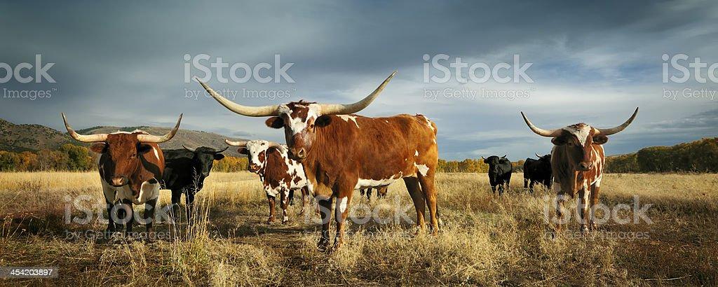 Three amigos stock photo