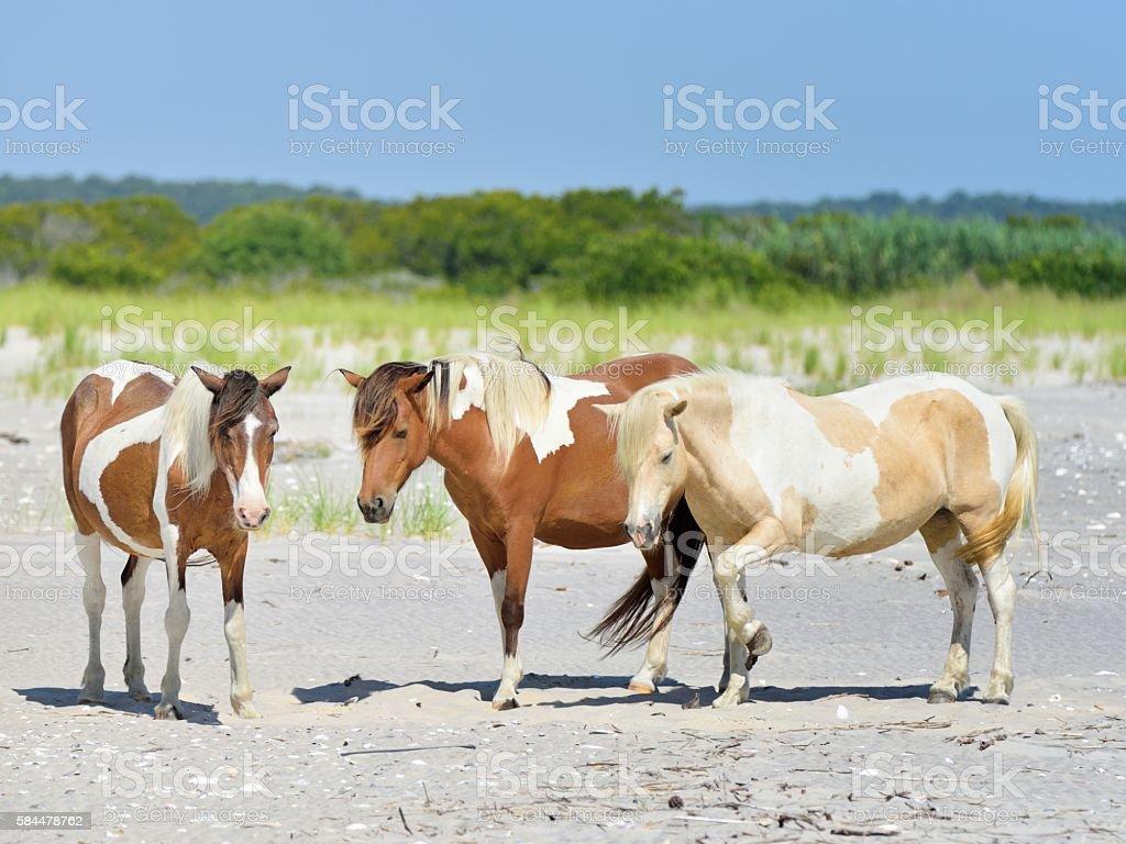 Three Assateague Mares stock photo
