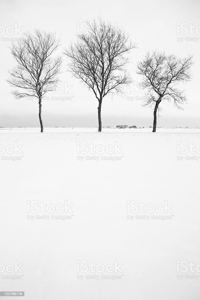 Three Bare Trees In Snow Landscape, Black And White royalty-free stock photo