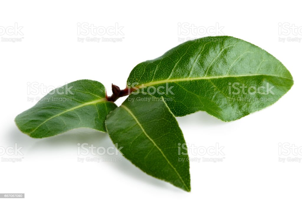 Three bay leaves isolated on white. stock photo