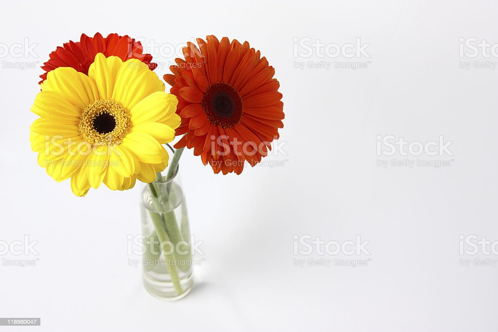 Three beautiful flowers gerbera in a glass vase royalty-free stock photo