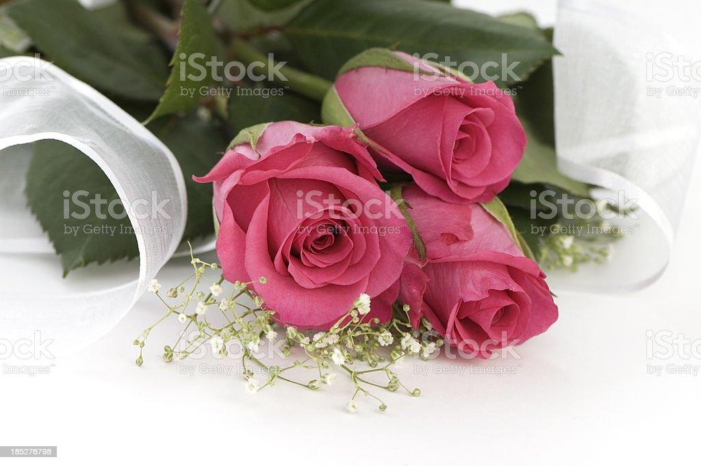 Three Beautiful Pink Roses. stock photo