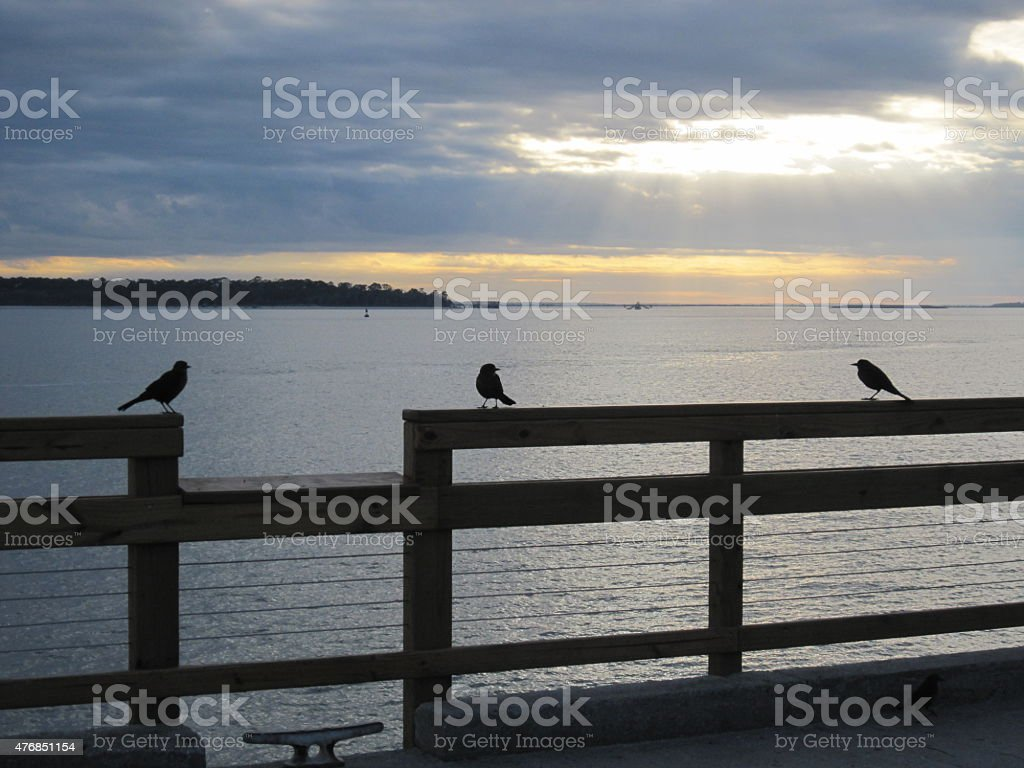 Three Bird Silhouette stock photo
