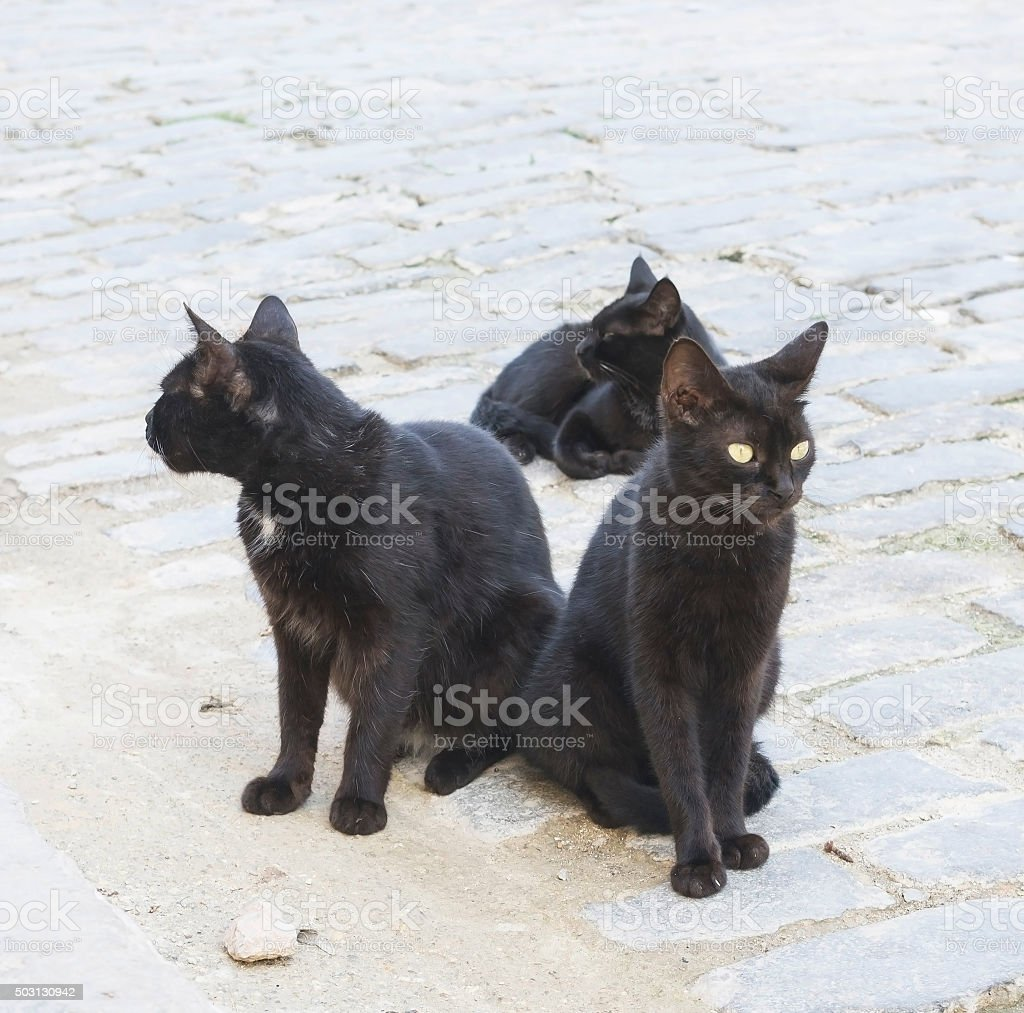 three black cats on the street stock photo