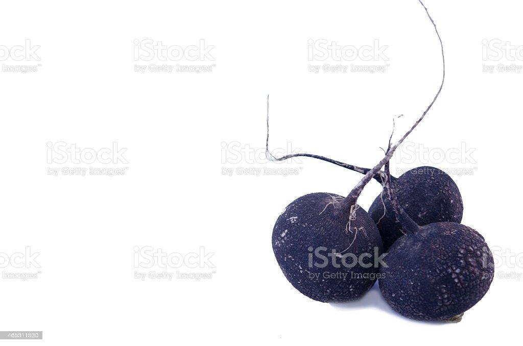 Three black raddishes isolated royalty-free stock photo