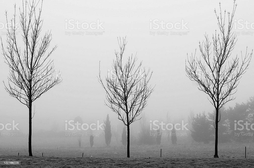 Three Black Winter Trees royalty-free stock photo