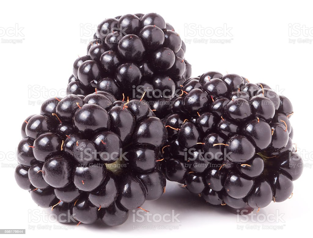 three blackberry isolated on a white background closeup stock photo