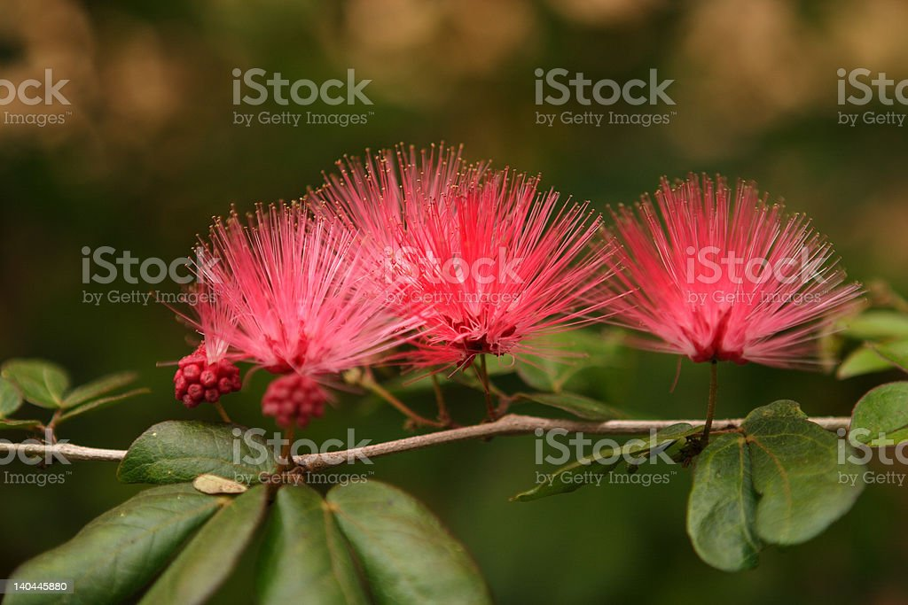 Three Blooms Bursting with Color stock photo